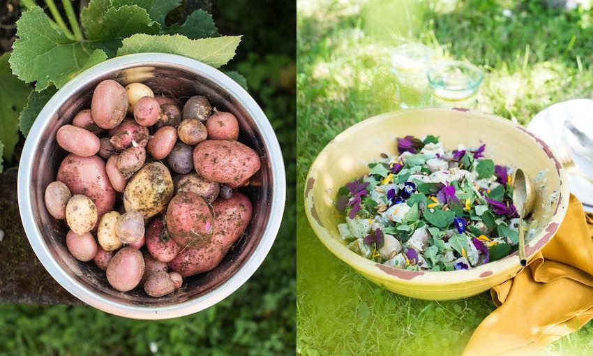 Potato Salad Recipe Nz