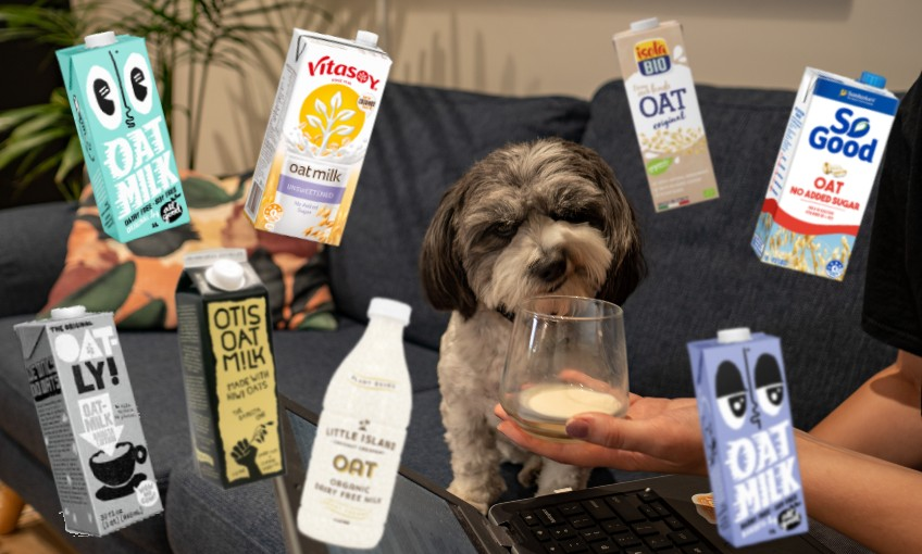 All the oat milks we could find, reviewed and ranked