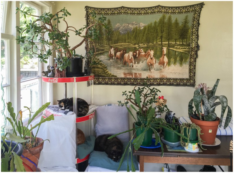 Interior scene with houseplants, a wall tapestry, and cats asleep on a Coke-branded shelf.