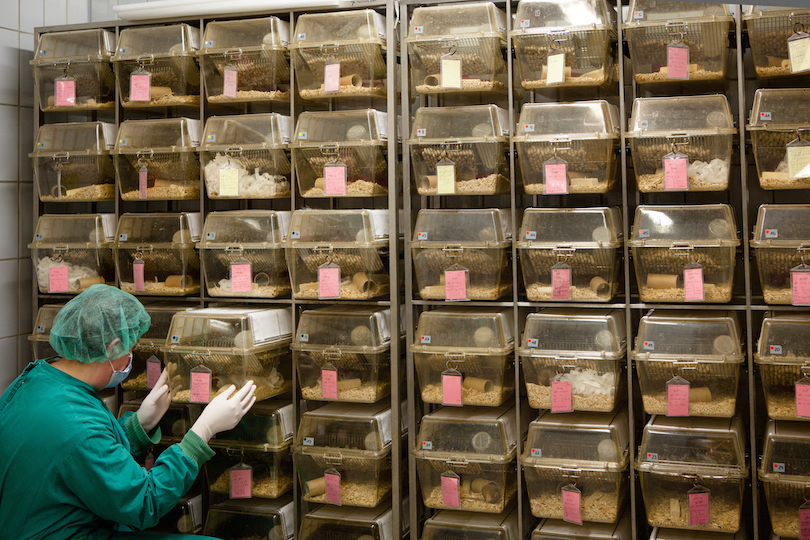 A lab assistant in front of a wall of cages containing albino rats