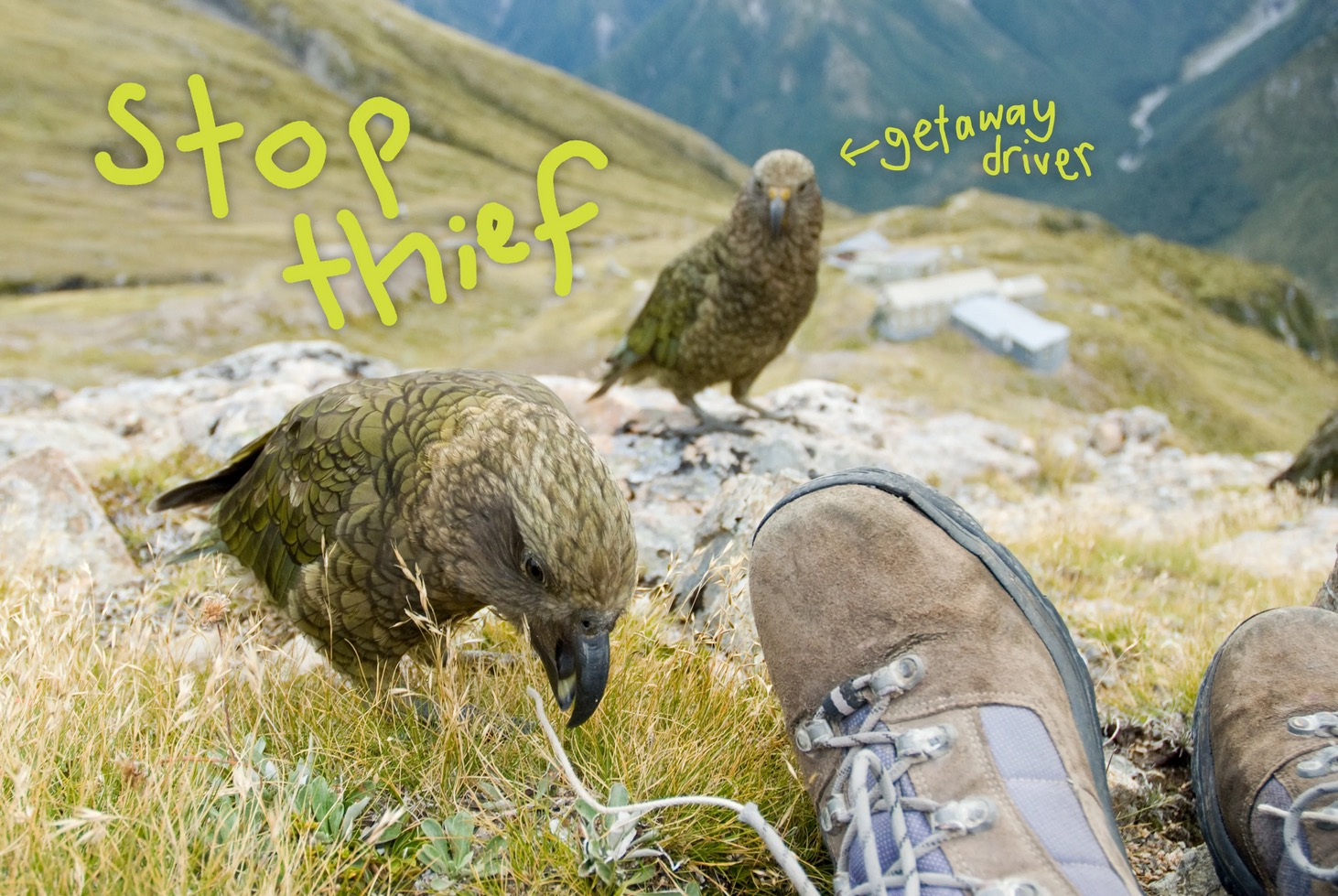 Photo of kea with 'stop thief' on it