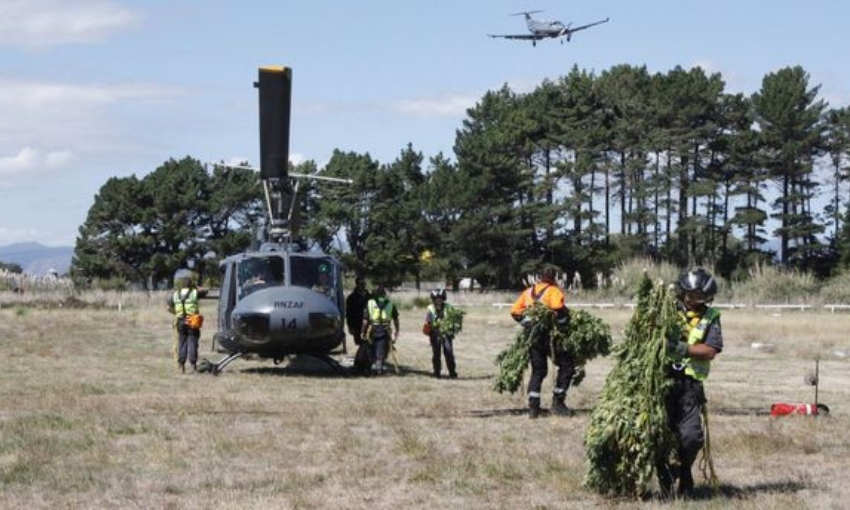 Why we should cheer the grounding of the annual helicopter cannabis hunt