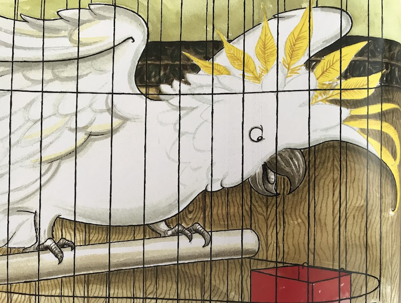 illustration of a cockatoo in a cage, squawking angrily