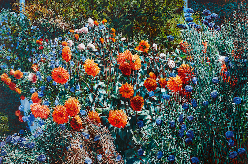 A painting of bright orange dahlias bending under their own weight, plus cornflowers.