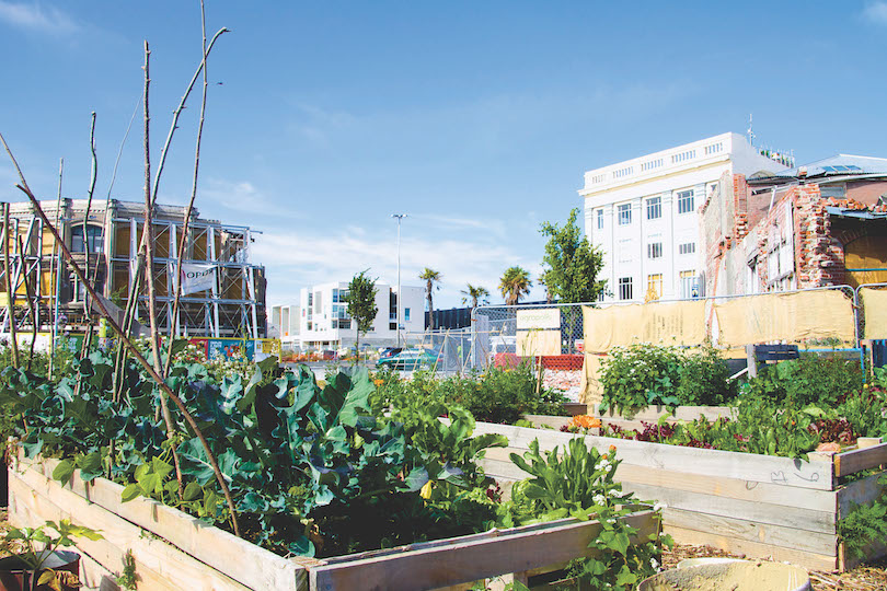A big blue sky, raised vegetable beds in foreground, buildings behind.