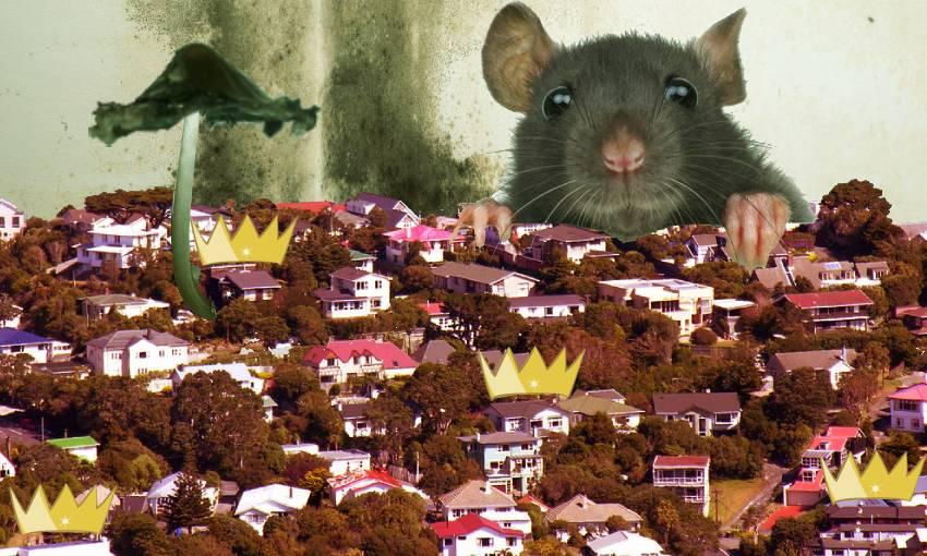 Revealed: Wellington's mouldiest rental homes