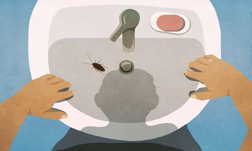 Illustration from perspective of person peering into sink, where there's a big gross cockroach