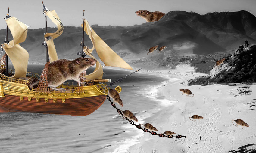 A depiction of rats streaming off a ship in New Zealand