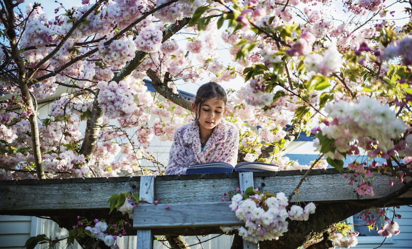 A young girl reads a book in a treehouse built in a flowering cherry tree –clouds of pink blossom around her.
