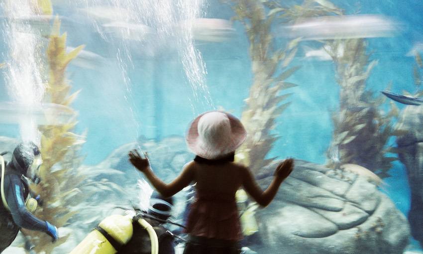 A small figure, perhaps a child, photographed at an aquarium, standing facing the tank, hands pressed against it. Inside is a watery turquoise dreamscape of kelp and divers.