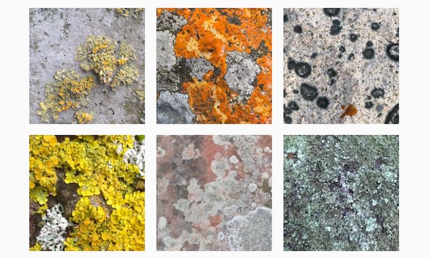 Creeping beauty: An appreciation of moss